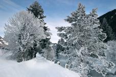 Winterspatziergang schützt vor Krebs